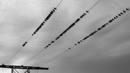 Picture of birds on cables.